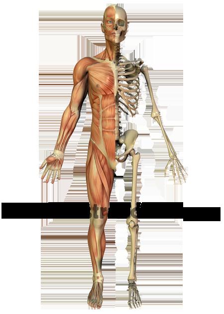 Verwandte suchanfragen zu anatomie des menschen pictures to pin on